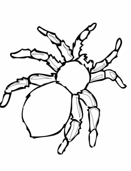 Poisonous Spider Coloring Pages