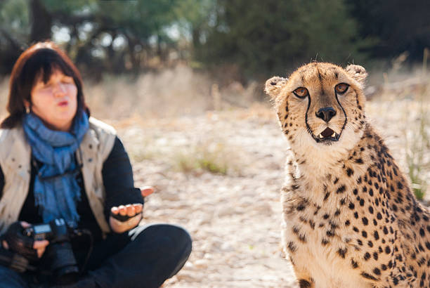 Pet Cheetahs – Can You Really Get One?