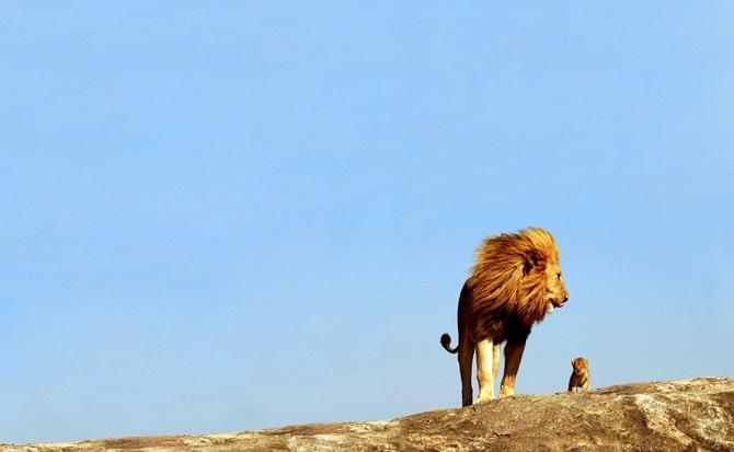 naturaleza, animales, belleza, mundos,