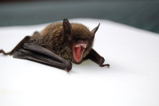 Man Dies After He 'Awoke To A Bat On His Neck' In Illinois
