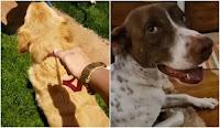 Em decisão inédita, dois cães conquistam o direito de acionar seus ex-tutores na justiça