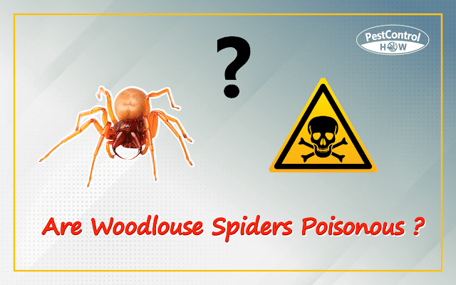 are-woodlouse-spiders-poisonous