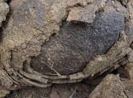 Pelapukan tanah