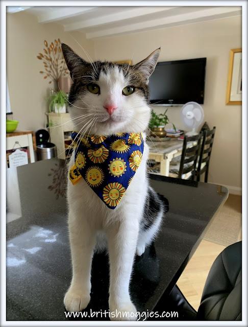 Cute tabby cat wearing a bandana