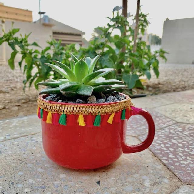 مشتل حدائق بجدة مشتل زهور بجدة  زراعة جميع النباتات في جدة