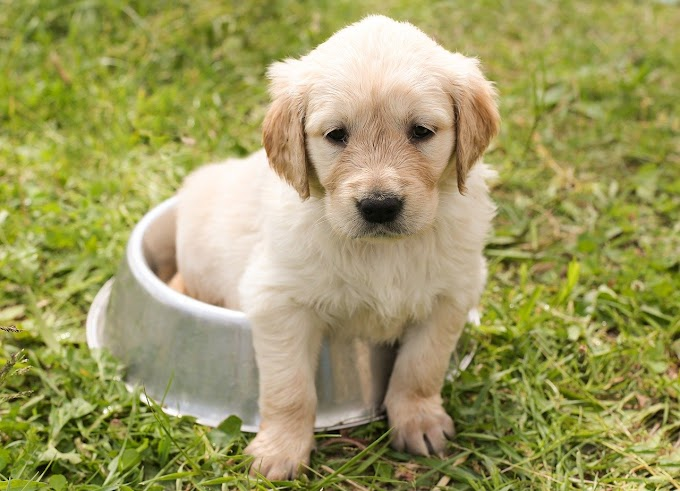 Croquettes bio pour chien : est-ce vraiment meilleur ?