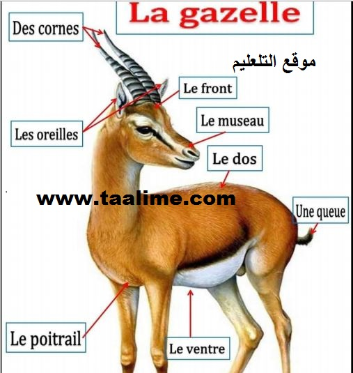 صور أسماء الحيونات باللغة الفرنسية