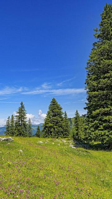 Lawn, tree, clouds, blue sky wallpaper