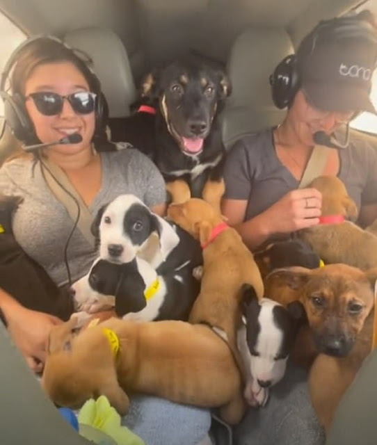 Animal Lovers Cram Small Plane With 27 Puppies On Mission To Save Them From Being Euthanized