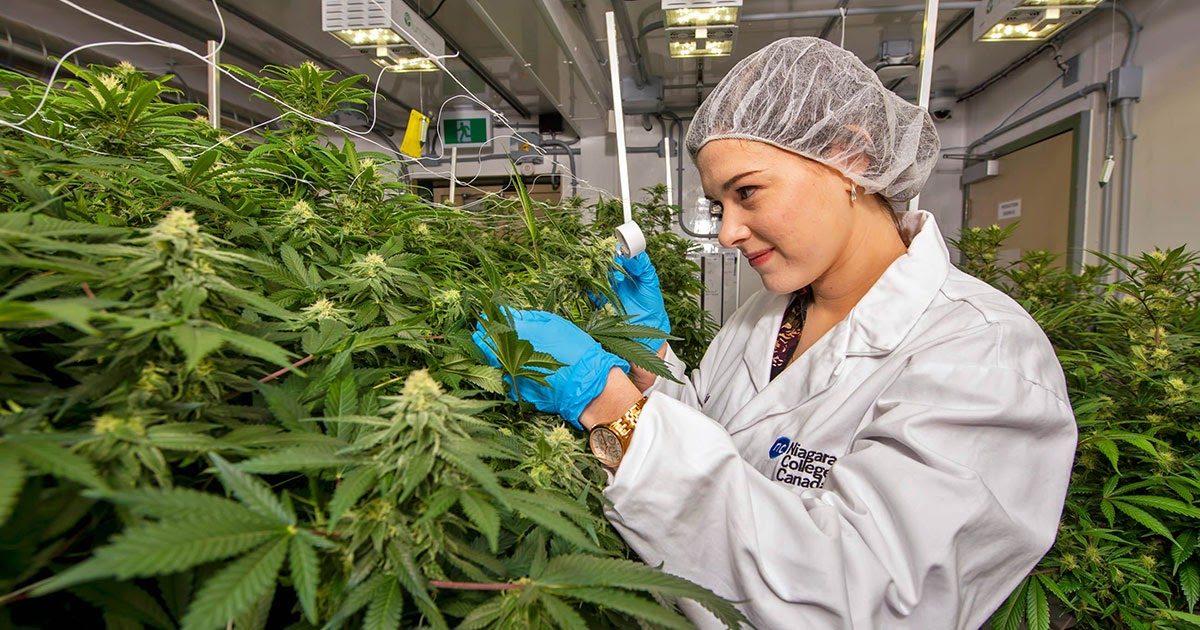 Cannabis Cultivation Market Size, Share & Trends Analysis Report |Cannabis Growers, Inc., Atlas Growers, Canntrust Holdings, Inc.