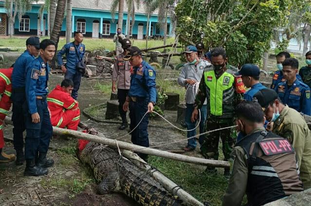 Babinsa Agung Sucianto Monitor Evakuasi Seekor Buaya di Desa Sepempang Natuna