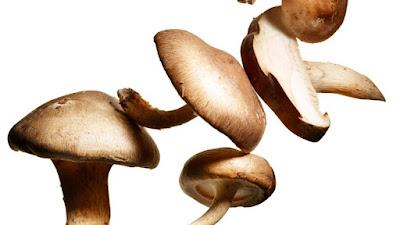 Shittake mushroom capsule supply in Nagpur