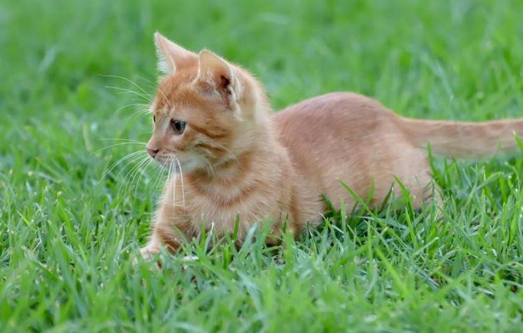 vitamin kucing colostrum