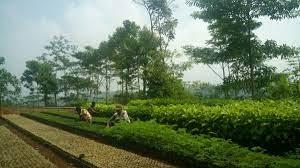 7 Langkah Pembangunan Kebun Bibit Rakyat (KBR)