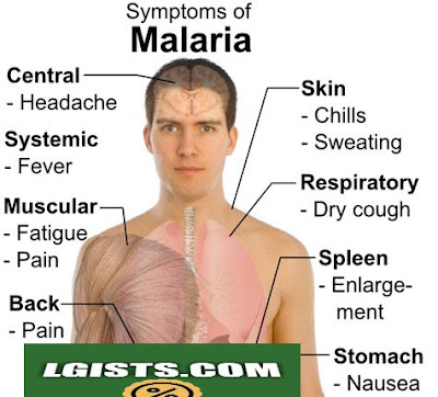 What is Malaria Fever? How To Prevent it