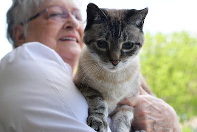 Los gatos domésticos son buenos para la salud física y mental