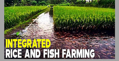 How to start Fish based Integrated farming