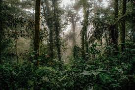 Konservasi Keanekaragaman Hayati Atasi Krisis Iklim
