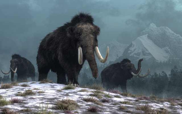Humans did not cause woolly mammoths to go extinct - climate change did