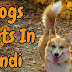 Dog Facts In Hindi | Amazing Facts About Dog In Hindi
