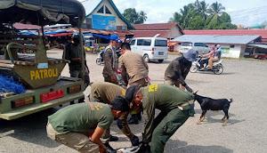 Nekat Berkeliaran Dijalan 2 Ekor Sapi dan 7 Kambing Diboyong Satpol PP Tebo