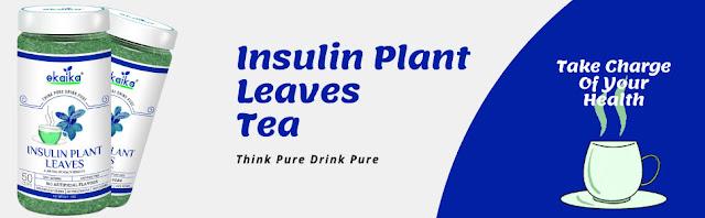 इंसुलिन प्लांट चाय | मधुमेह के लिए हर्बल चाय | रक्त शर्करा के स्तर को नियंत्रित करनेवाला