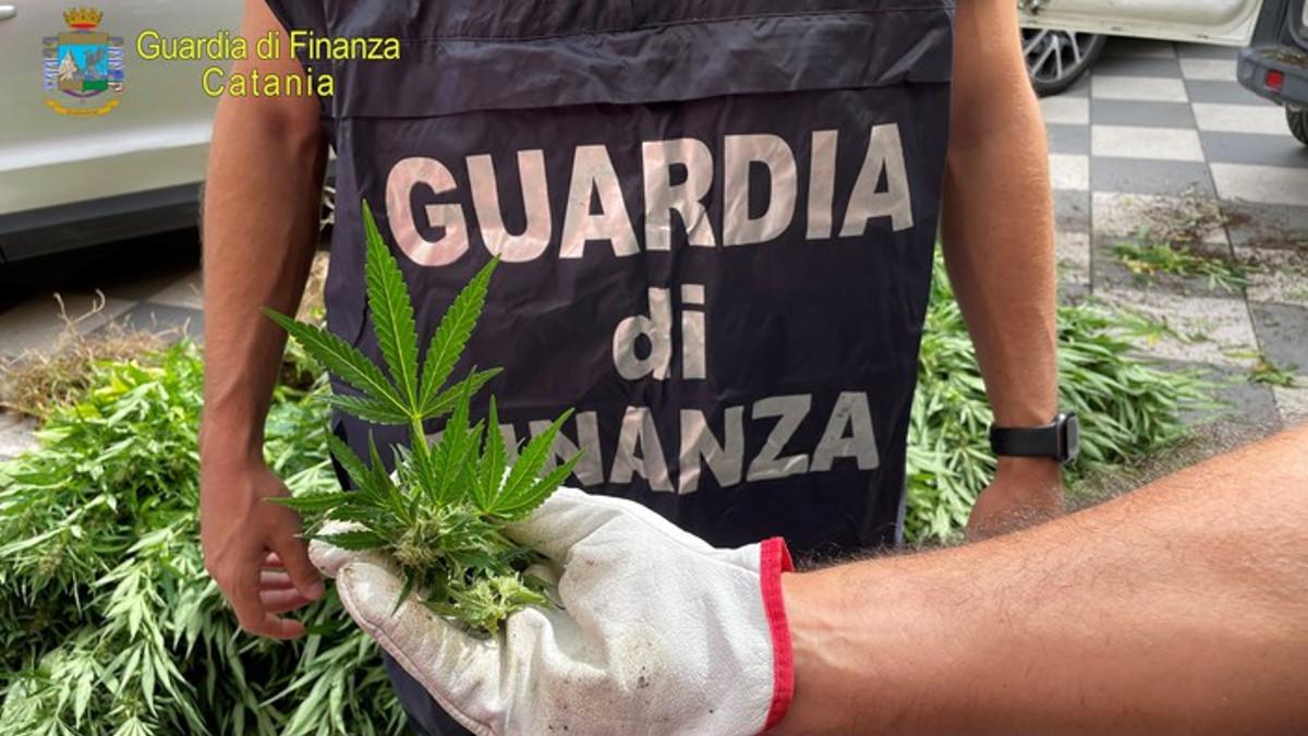 sequestro mille piante di canapa