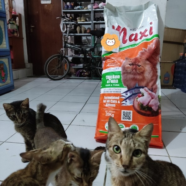 Review Makanan Kucing Maxi Secara Lengkap