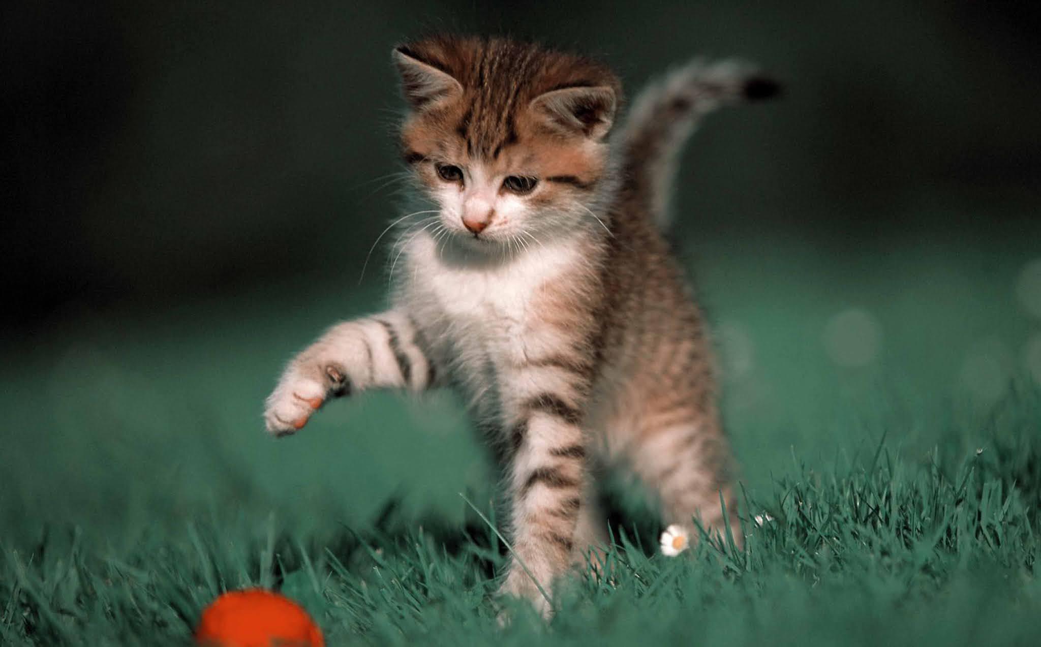 21 Free wallpaper image kitten, cat, glance, cute, animal wallpaper HD, background Ultra HD 4K 5K 8K for Computer Desktop