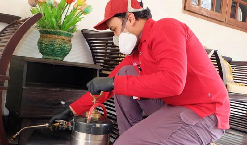 Tips Memilih Jasa Anti Rayap Semarang