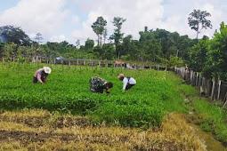 Tingkatkan ketahanan pangan dimasa Pandemi Covid-19, Pendampingan Terhadap Petani Terus Dilakukan