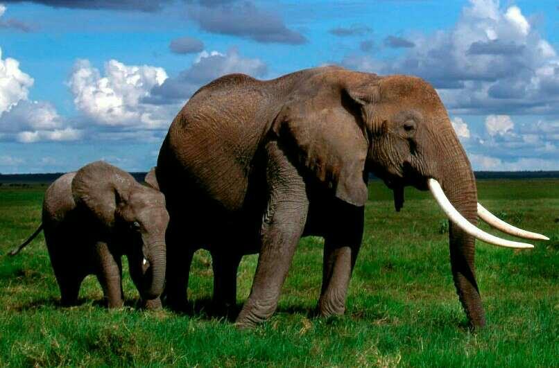 hewan gajah