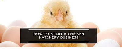 How to start a small scale chicken hatchery
