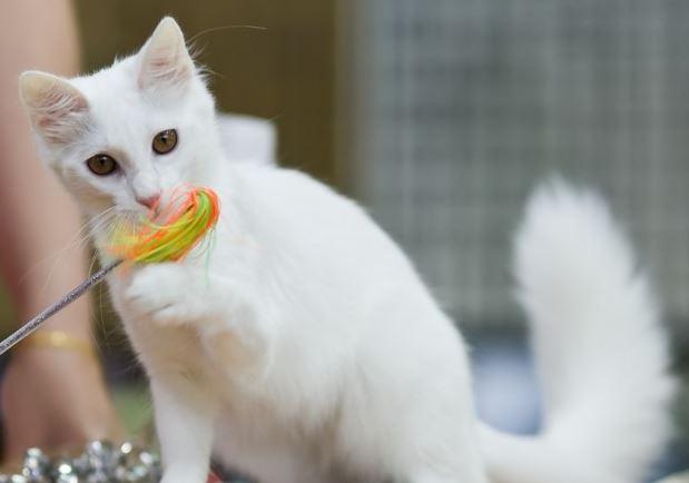 makanan kucing wet food