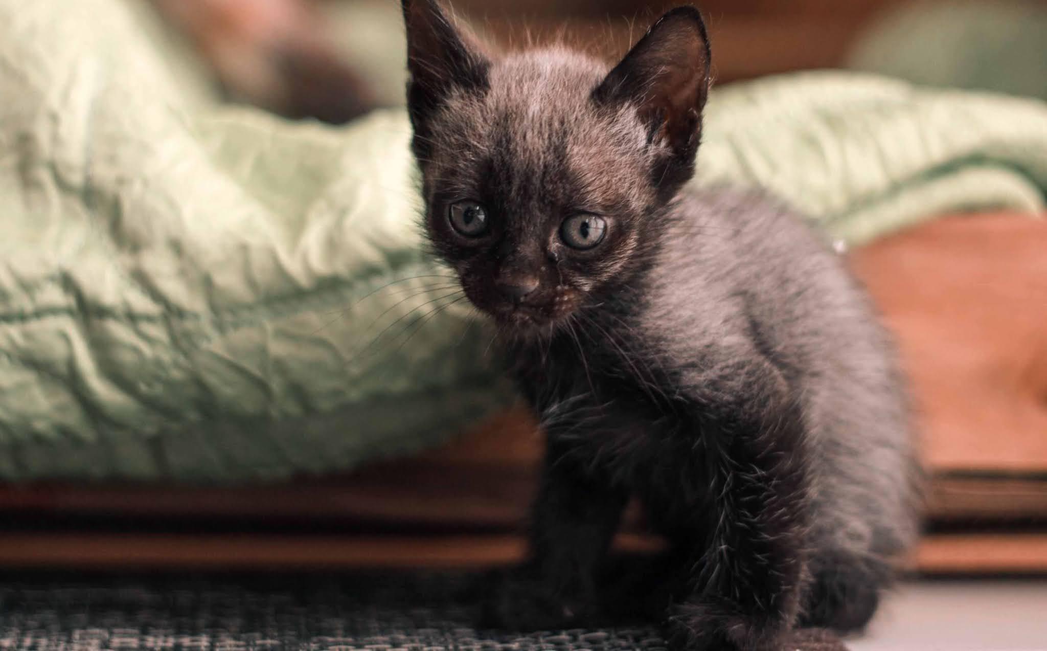 22 Best of wallpaper image kitten, cat, cute, sunlight, glare wallpaper, background Ultra HD for Computer Desktop