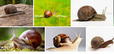 How to start Snail farming for profit