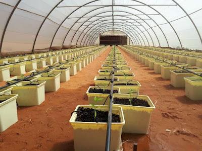 الزراعة المائية من خلال نظام الداتش باكيت