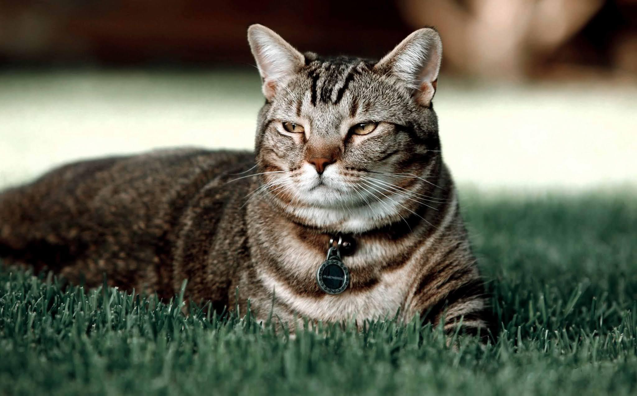 wallpaper image kitten, cat, grass, playful, cute wallpaper, background Ultra HD 4K 5K 8K for Computer Desktop or Laptop