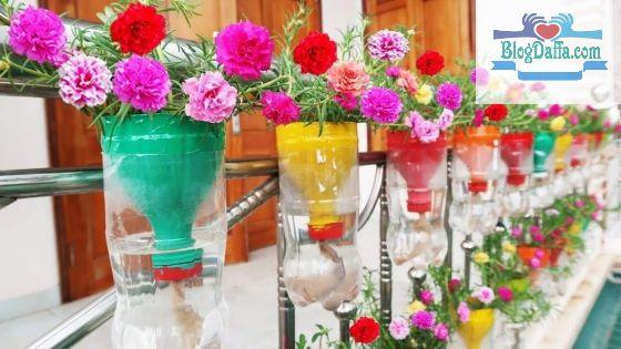 Tips Menanam Bunga Krokot di Botol Bekas