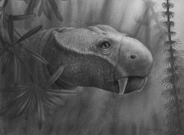 Fossil dental exams reveal how tusks first evolved