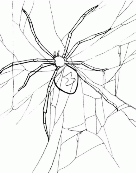 Spider And Web Coloring Pages 2
