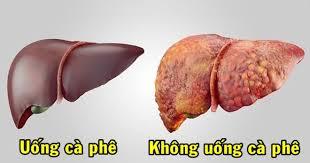 Uống cafe tốt cho sức khoẻ, bệnh gan, tim mạch,Cafe rang xay Đồng Nai, cafe nguyên chất Đồng Nai, cafe pha máy Đồng Nai, cafe pha phin Đồng Nai,