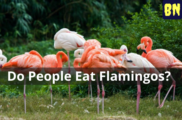 Do People Eat Flamingos?