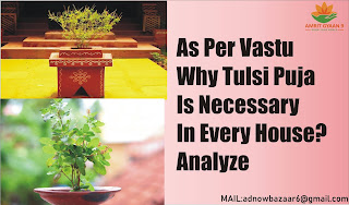 As Per Vastu Why Tulsi Puja Is Necessary In Every House? Analyze It's Significance