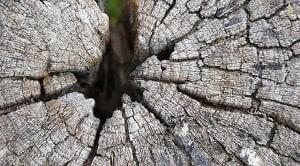 Pembuluh kayu merupakan hasil pembelahan sel-sel inisial kambium bentuk kumparan dan merupakan suatu ruas dari suatu jaringan yang lebih panjang yang disebut dengan pembuluh atau unsur pembuluh atau anggota pembuluh.
