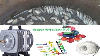 বায়োেফ্লকে পাম্প এয়ারেশন সিস্টেম? Biofloc Fish Framing (পর্ব ৭)
