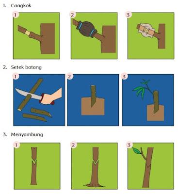 Perkembangbiakan Tumbuhan Secara Vegetatif Buatan