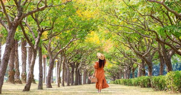 嘉義高鐵站台灣欒樹隧道欣賞黃綠紅美景,愜意散步秋意上心頭