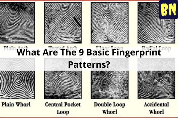 What Are The 9 Basic Fingerprint Patterns?