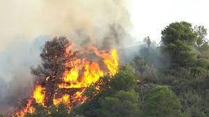 Kerusakan Hutan Disebabkan oleh Zat Kimia dan Makanis
